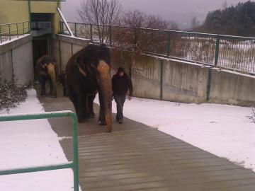 Ochrana před uklouznutím topnými kabely, chodníček pro slony, ZOO Ústí nad Labem